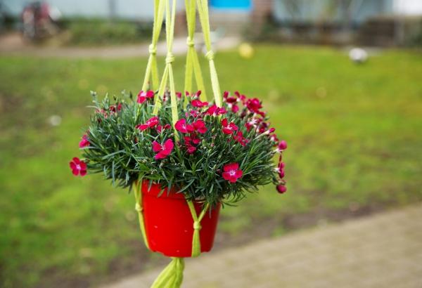 Kostenlose Anleitung Blumenampel Aus Makramee Selber Machen